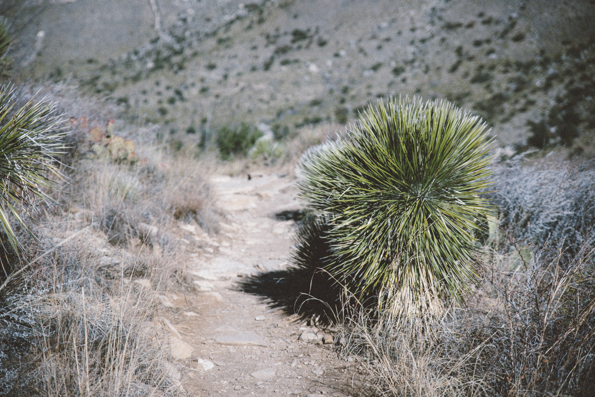 guadalupe mountains national park america yall jeremy pawlowski vsco texas camp plant