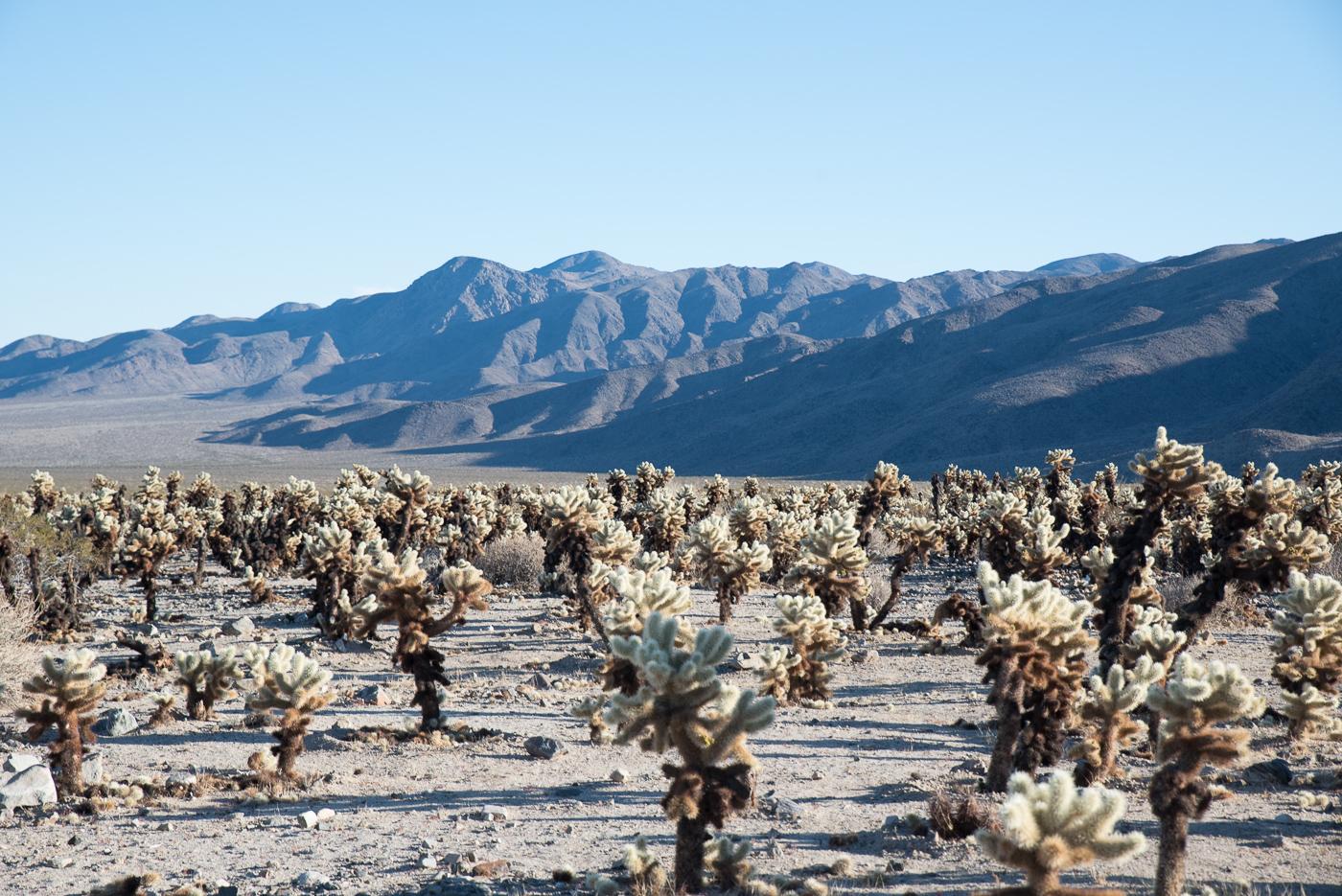 america yall jeremy pawlowski lauren simpson joshua tree national park california vsco camping cactus