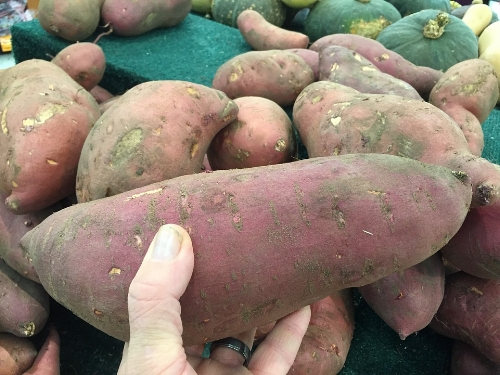 I can't quite wrap my smallish hand around a chubby sweet potato, which is about as long as two of my hand-widths put together.