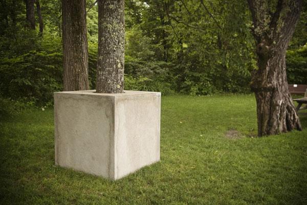 Tree Cube II , 2013  detail