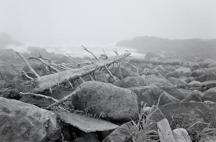 Driftwood, Monhegan Island, Maine