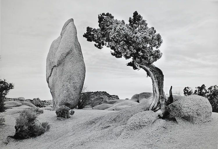 Juniper and Rock Spire, Joshua Tree N.P.