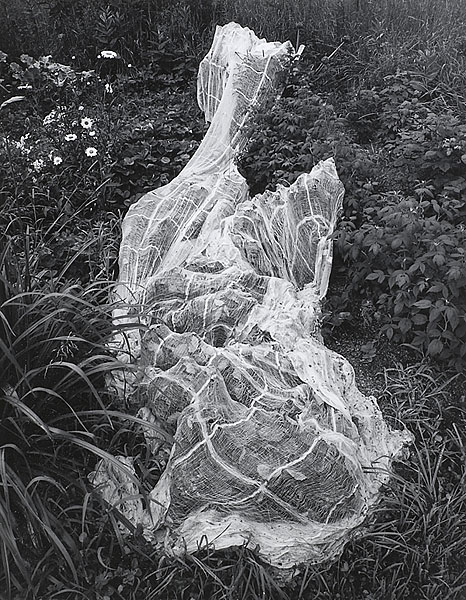 Bird Net, Vt.