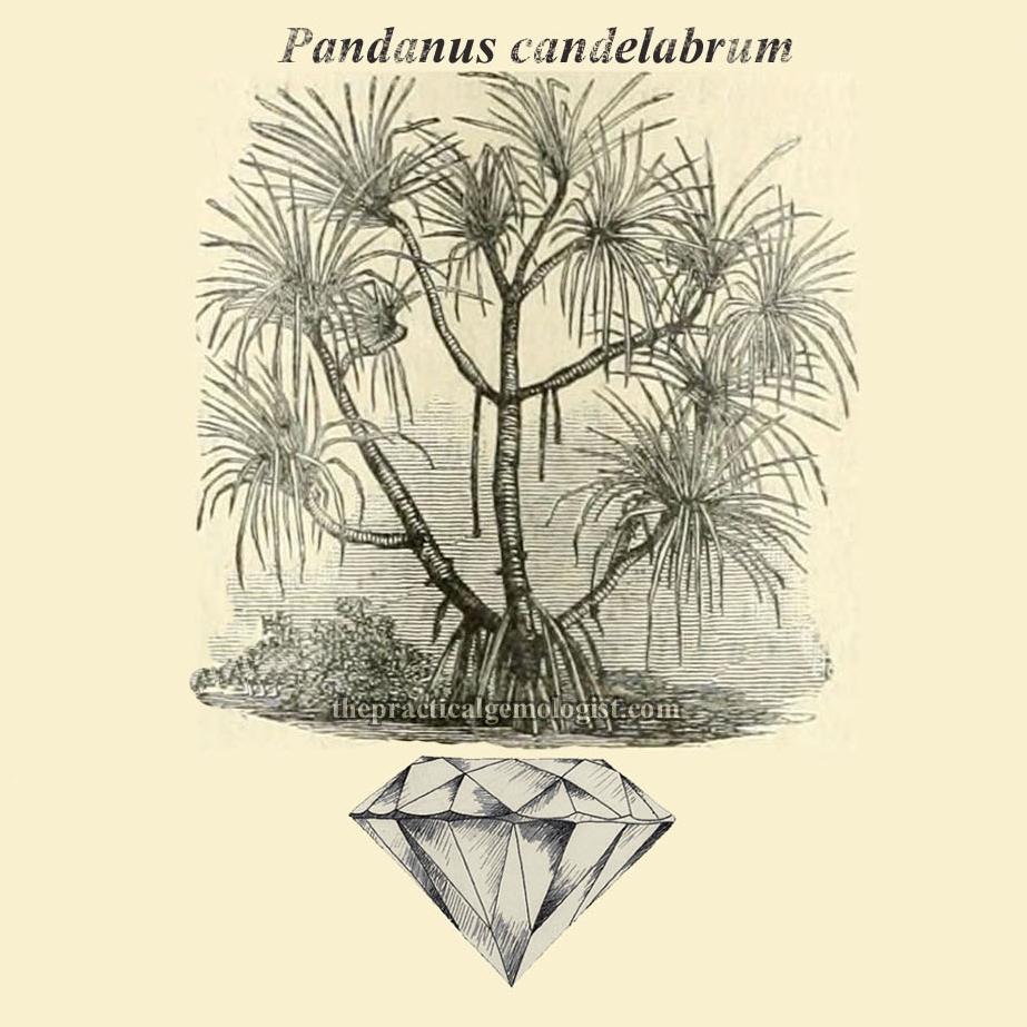 diamond plant