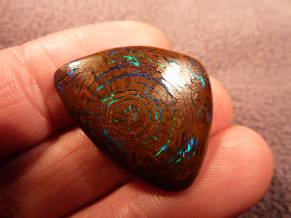 OpaliZed Fossil Wood from Queensland Australia