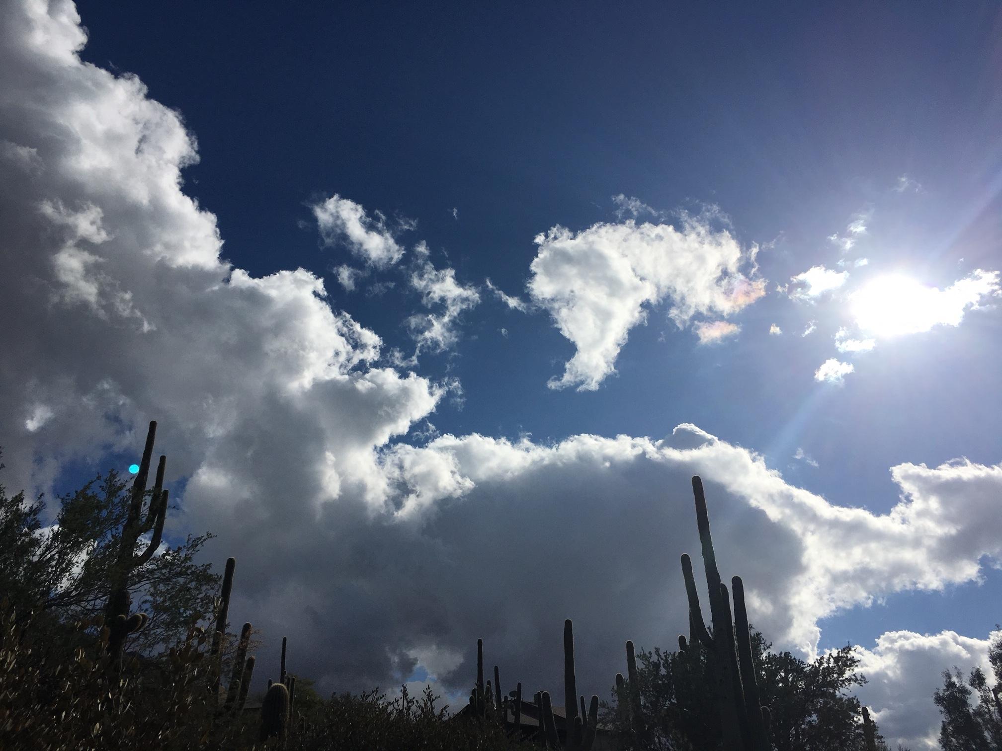 Desert Noon