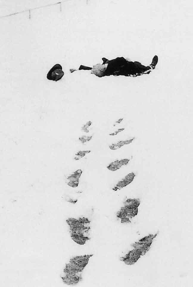 Walser in the snow,  deadas a log