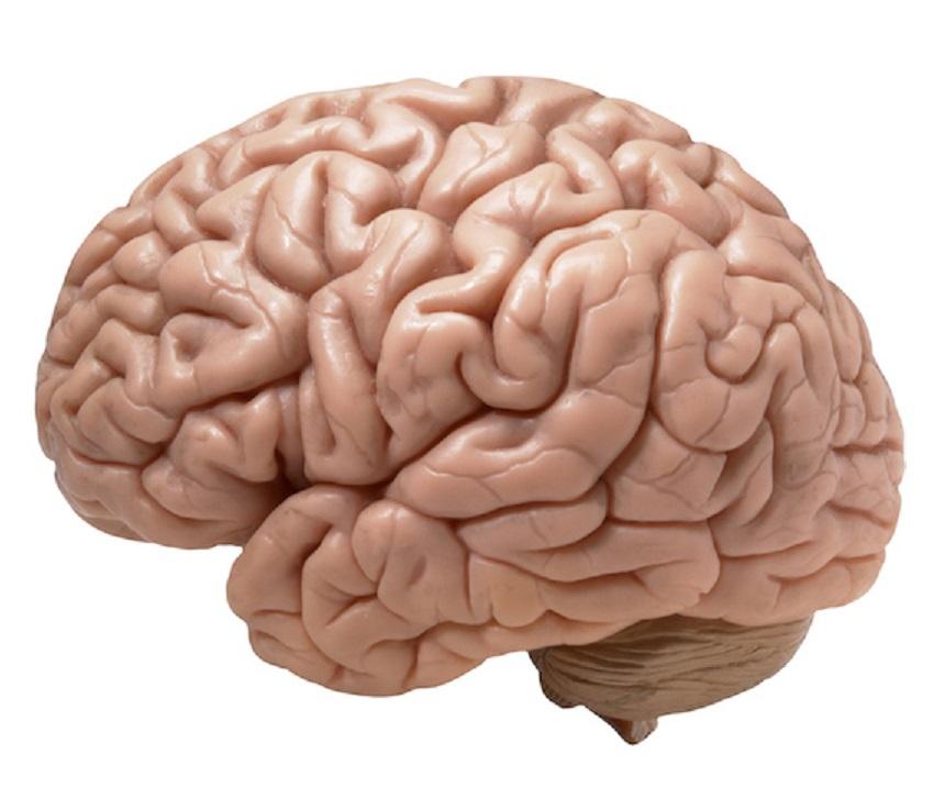 brain8.jpg