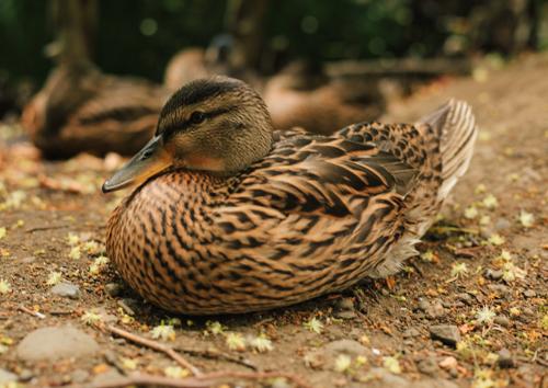 F*ck the ducks... amirite guys?