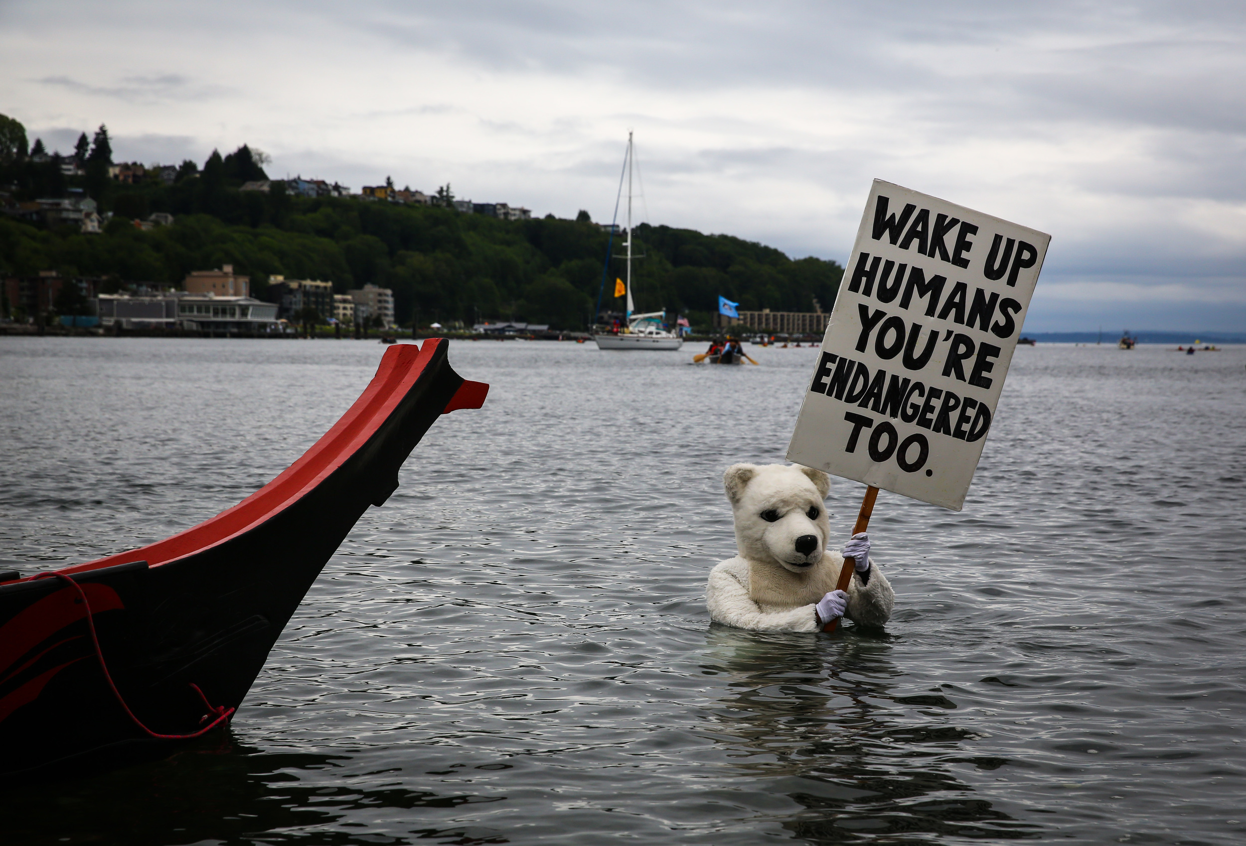 A person in a polar bear costume wades through the water during a protest against drilling in the Arctic and the Port of Seattle being used as a port for the Shell Oil drilling rig Polar Pioneer. The protest flotilla drew many paddlers to show their displeasure with the rig being moored in Seattle. Photographed on Saturday, May 16, 2015.