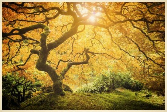 tree.jpg