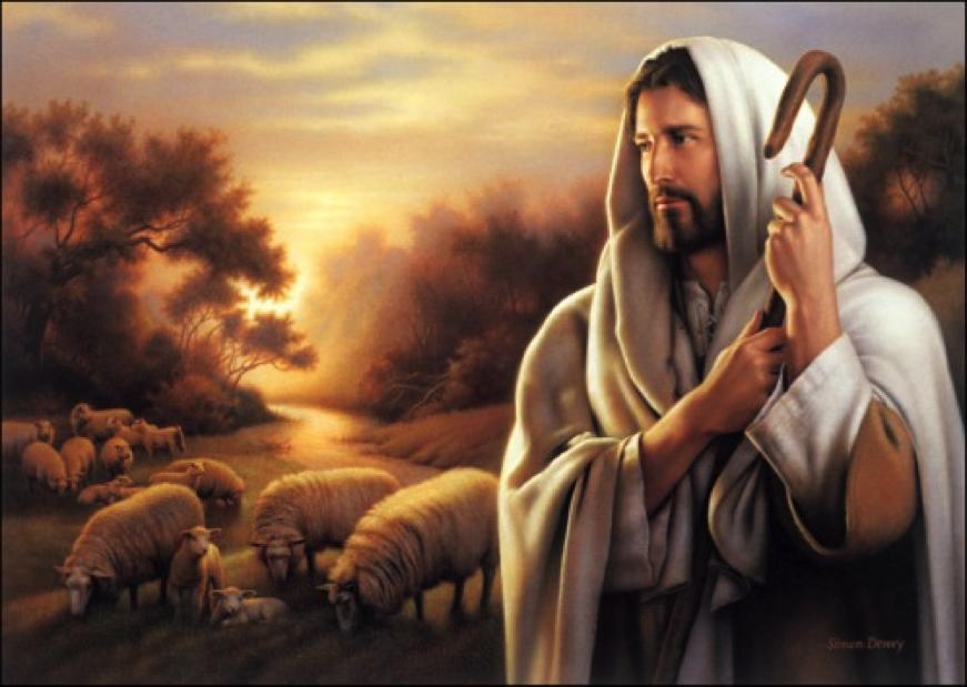 shepherd_nice