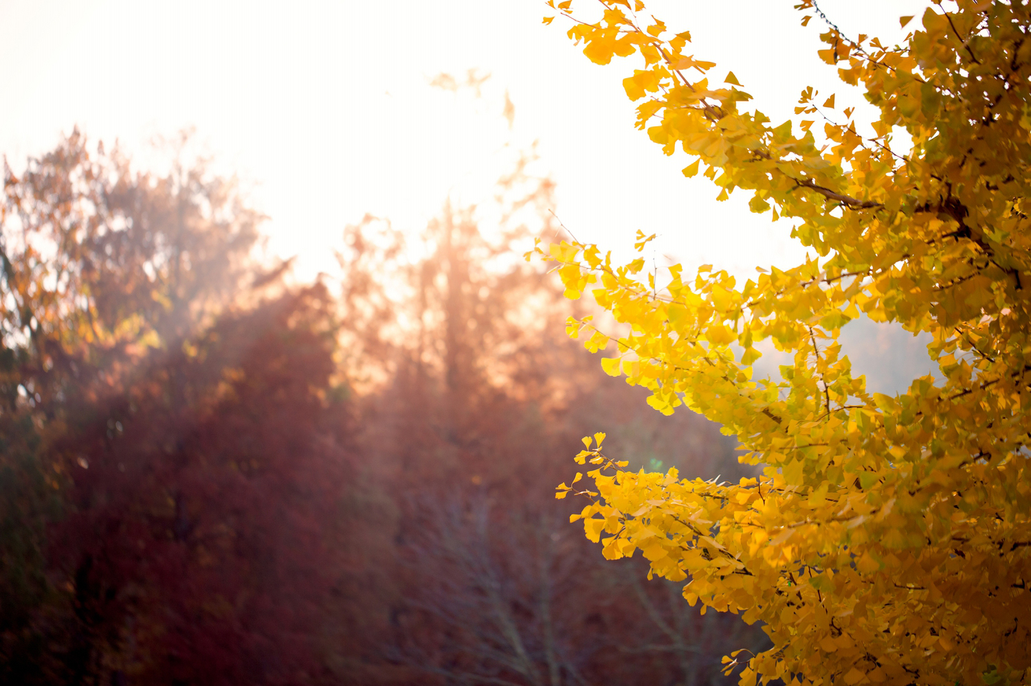 fall-family-session-northern-virginia.jpg