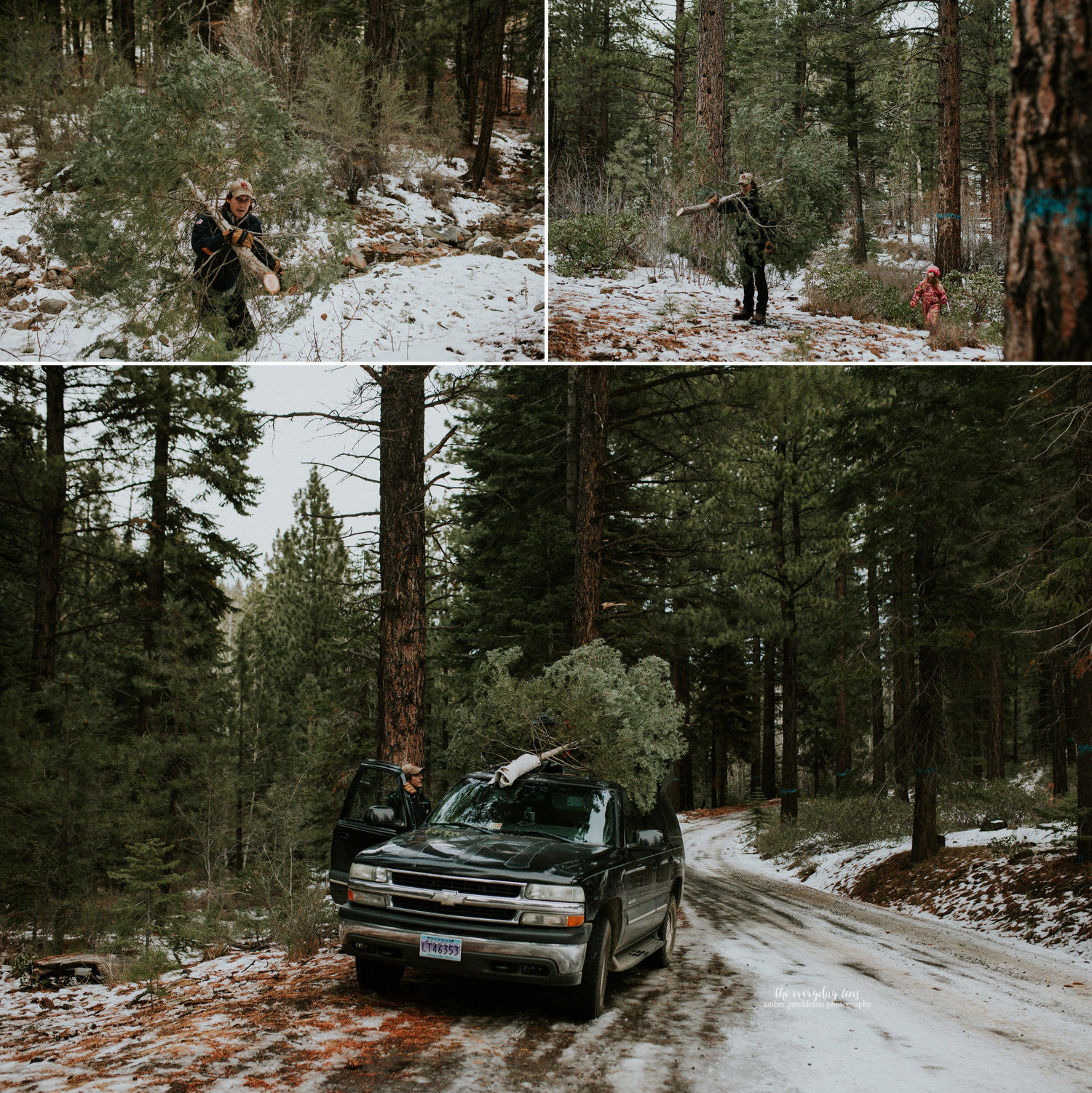 christmas-tree-cutting-tahoe-forest.jpg