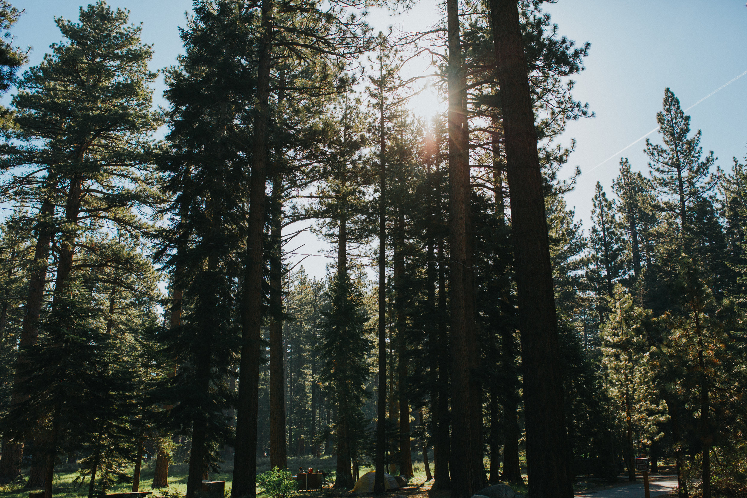 fallen-leaf-lake-camping-california-family-campsite