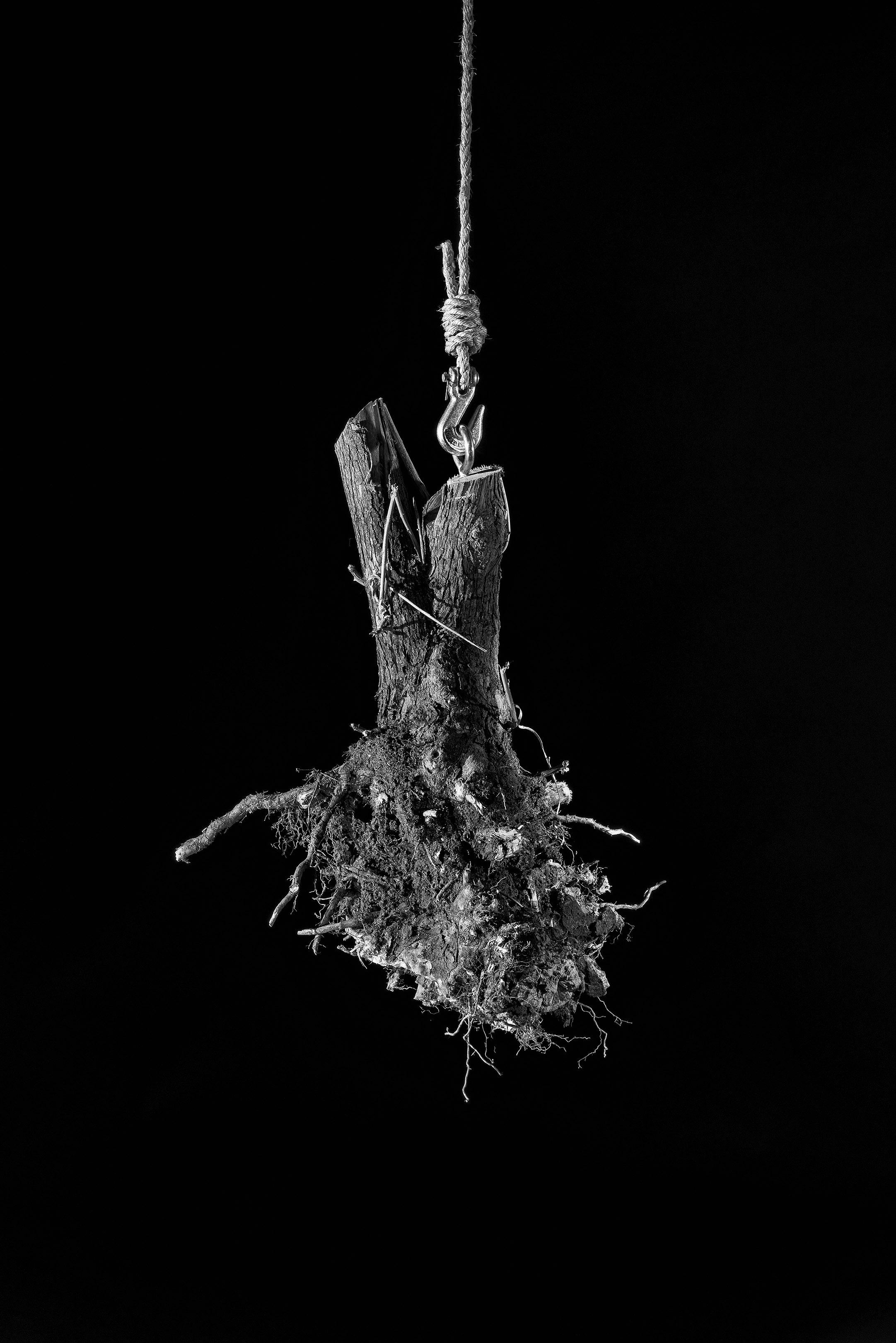 root1 8x10print.jpg