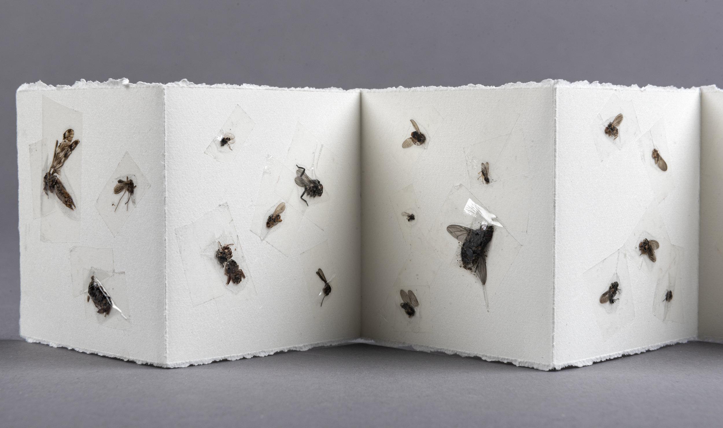 bugbookdetail.jpg