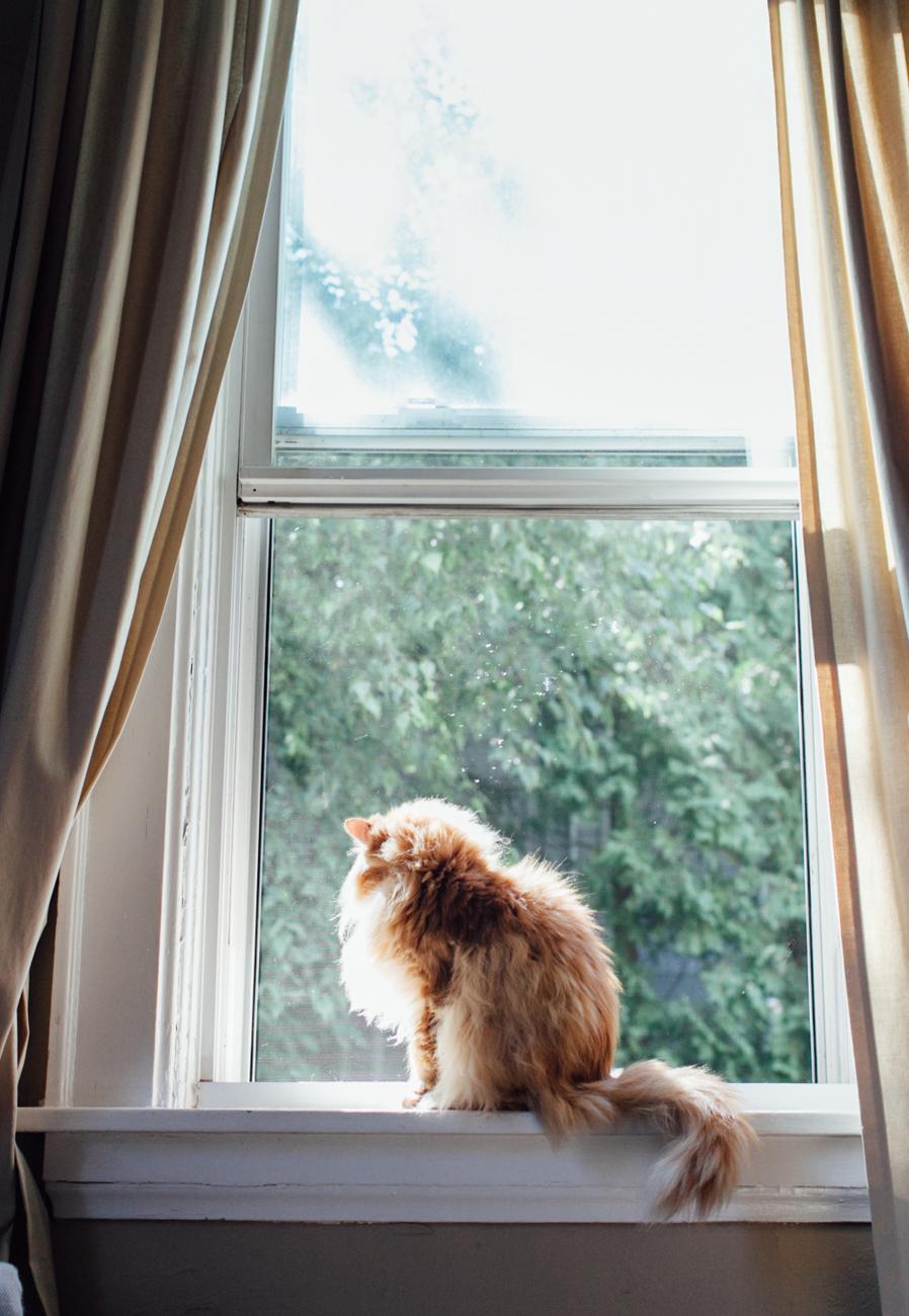 longhair-cat.jpg
