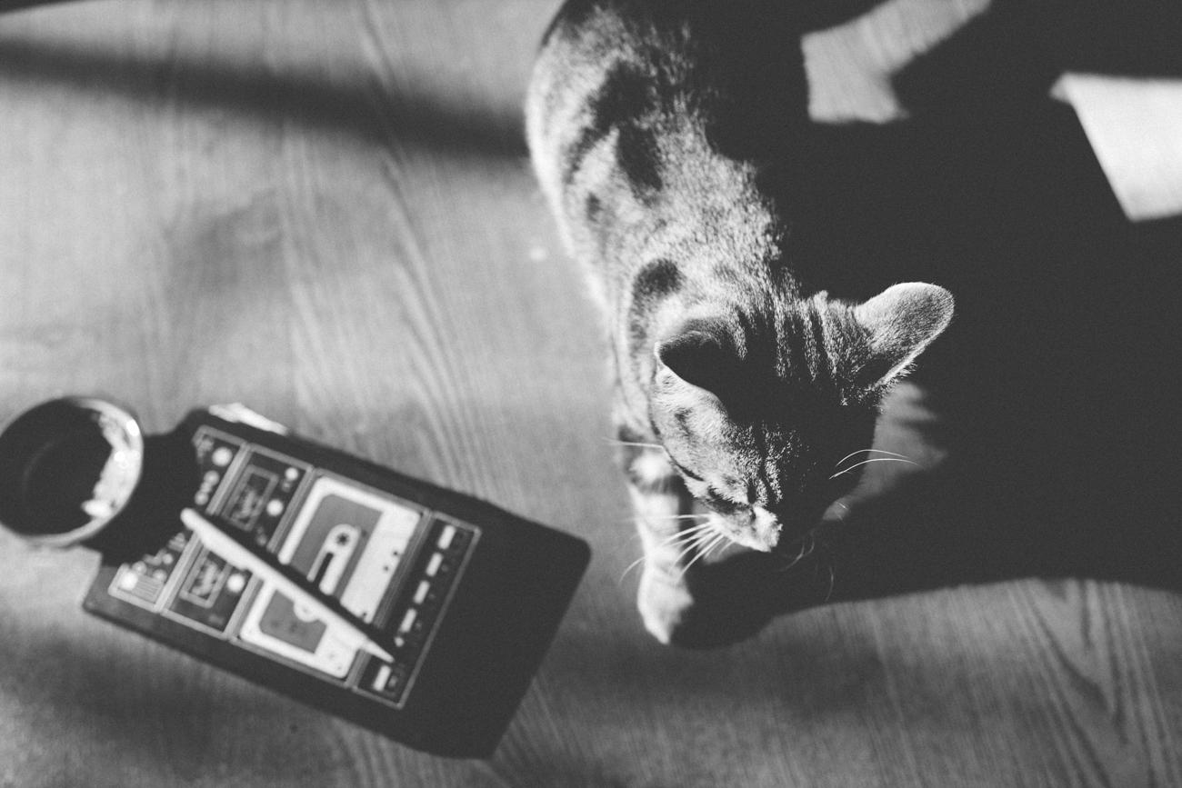 kitten-walking.jpg