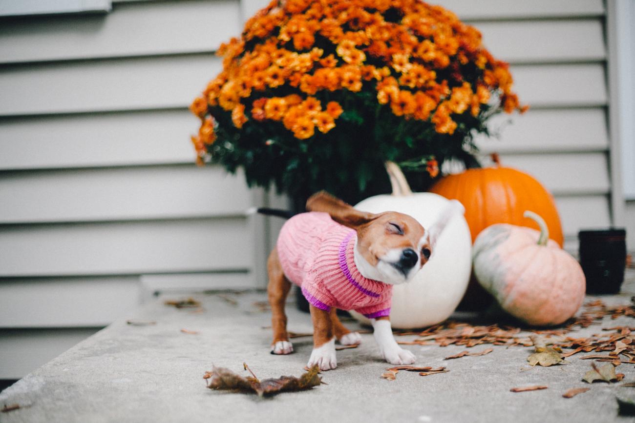 puppy-in-sweater.jpg