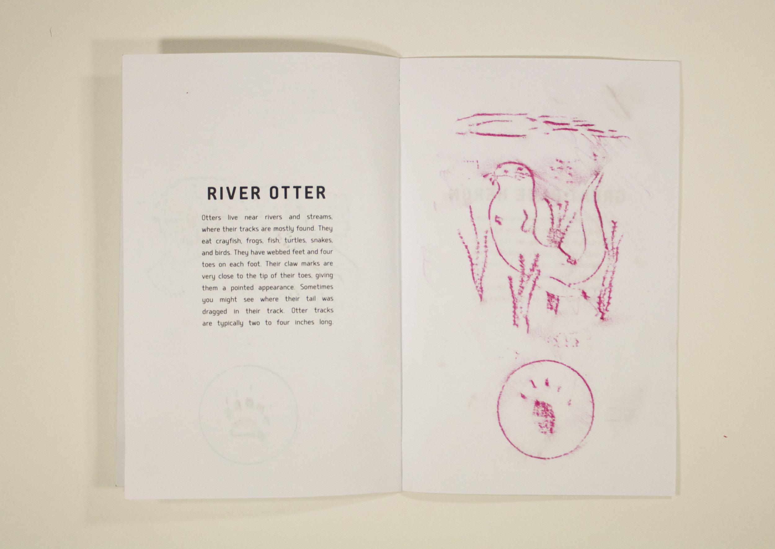 Otter rubbing.jpg