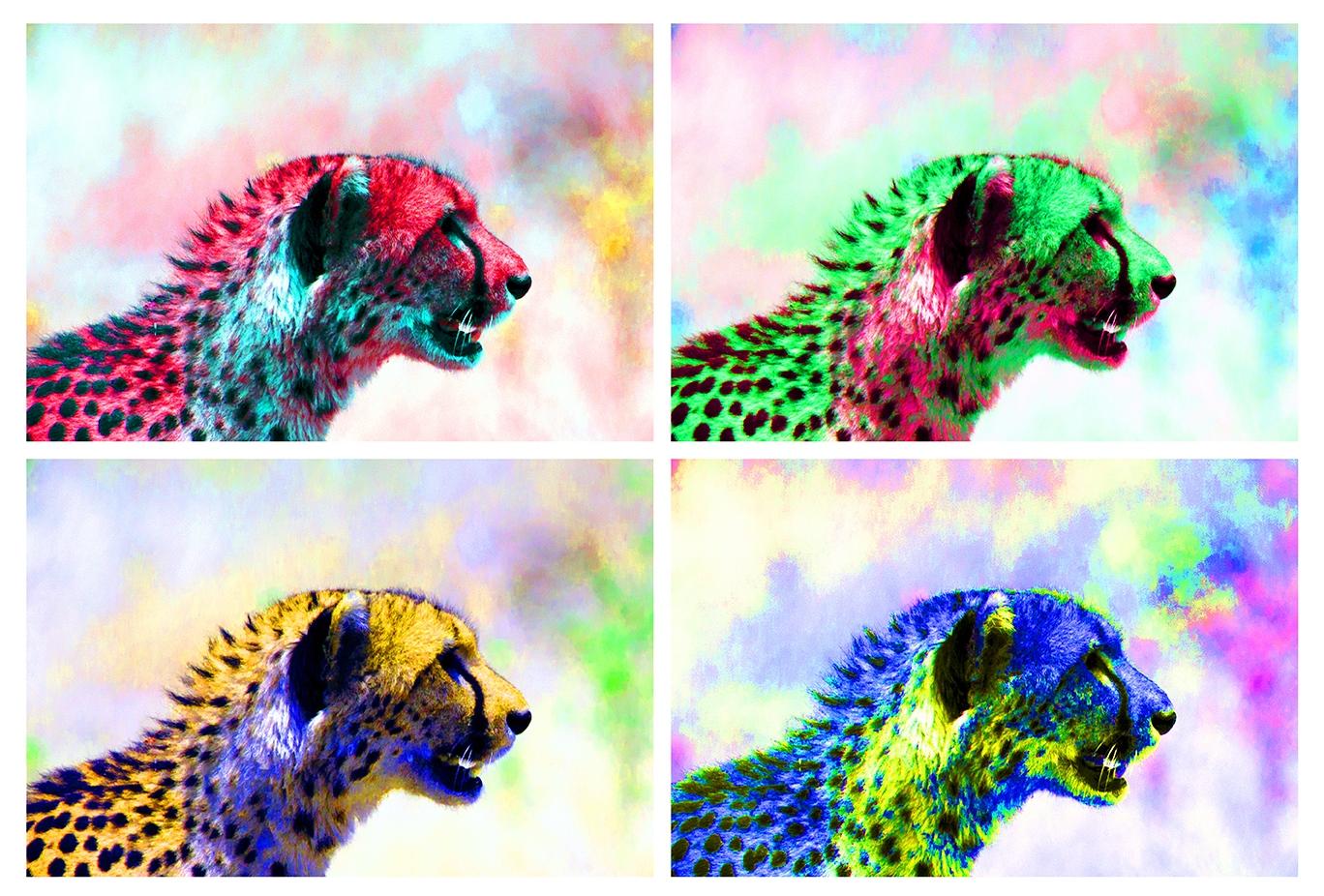 Cheetah 13x19-s.jpg