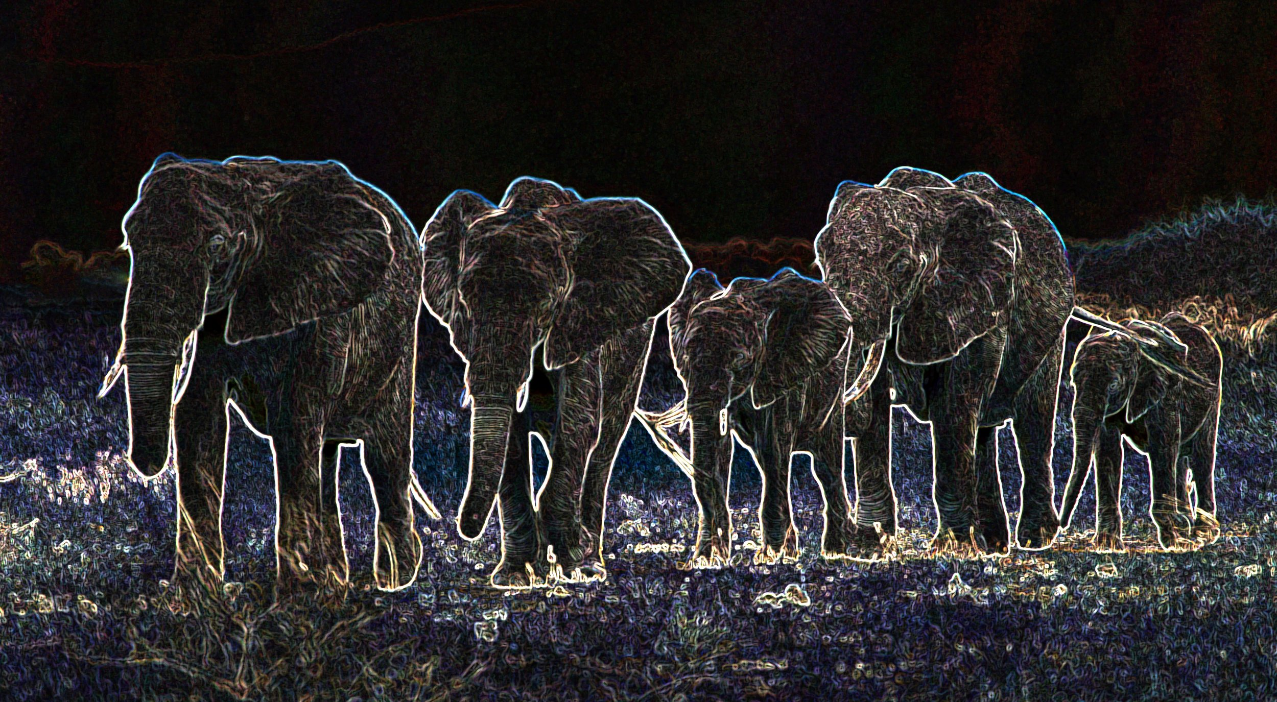 Elephant Train 20x11.jpg
