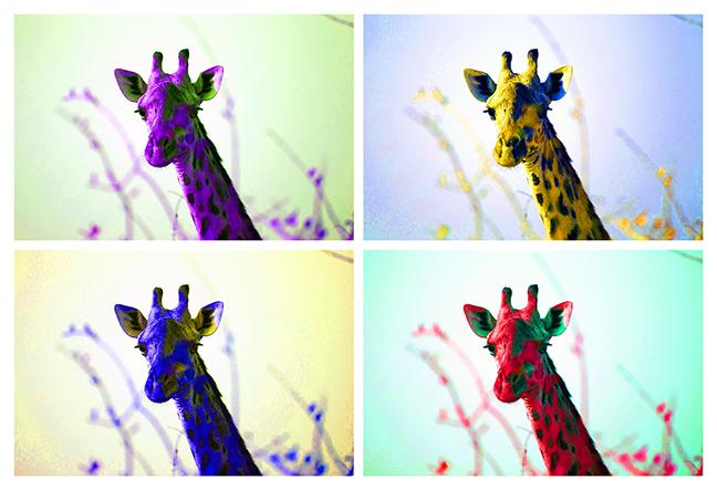 soft giraffe 13x19 web.jpg