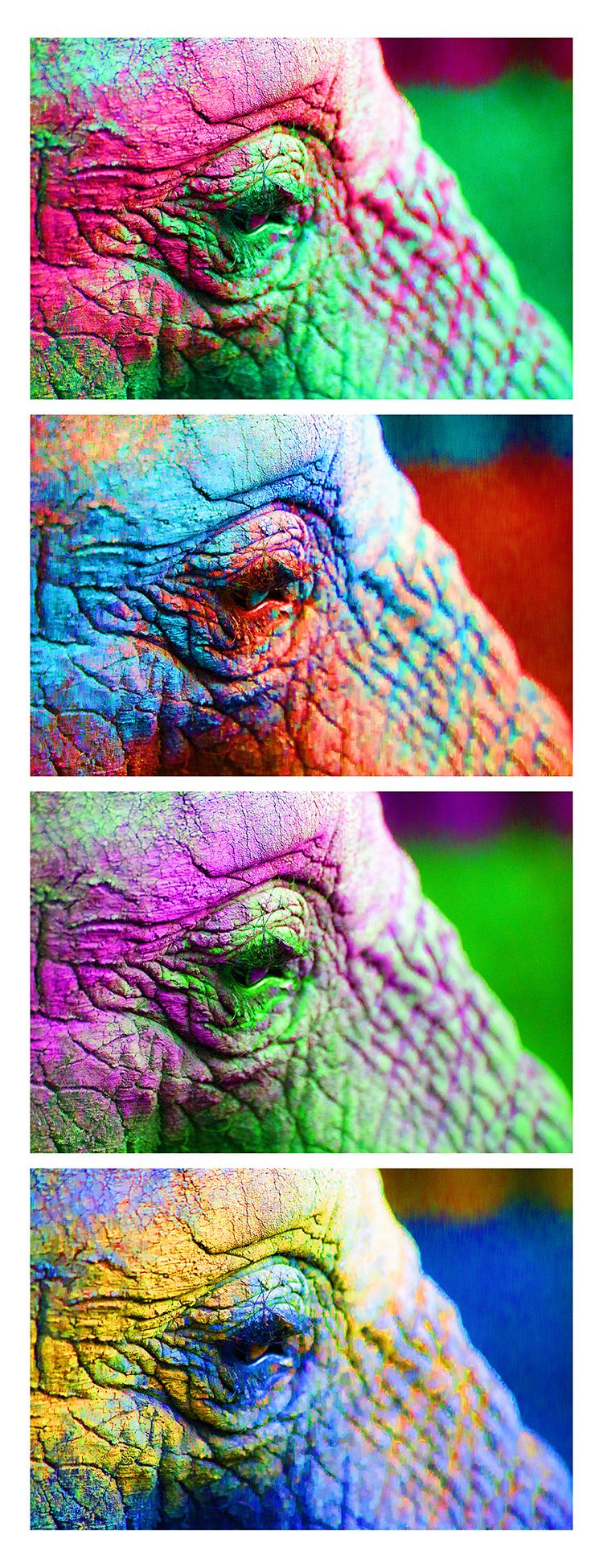 elephant eye _WEB.jpg