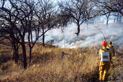 Here's a typical low-intensity prescribed burn in a bur oak savanna.
