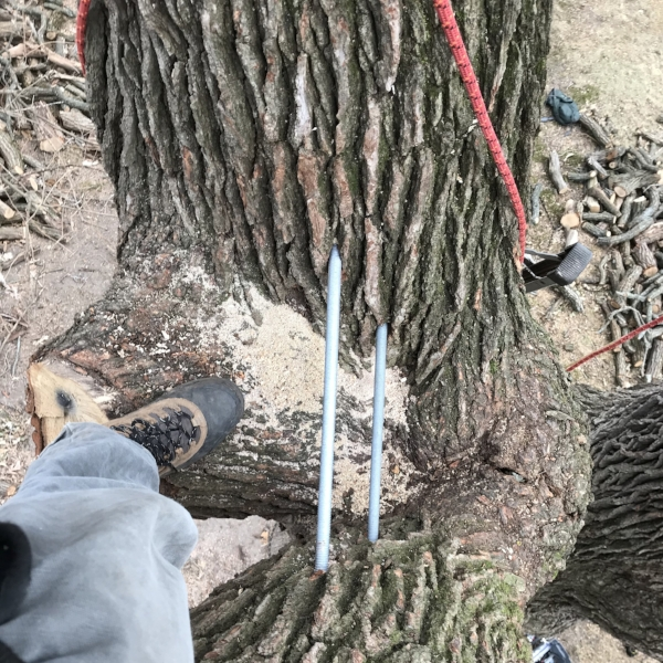 Top view of two 6 foot long braces in a heritage burr oak