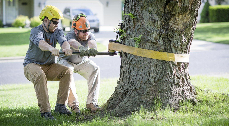 Madison Arborists Promoting Tree Care Planting Preservation