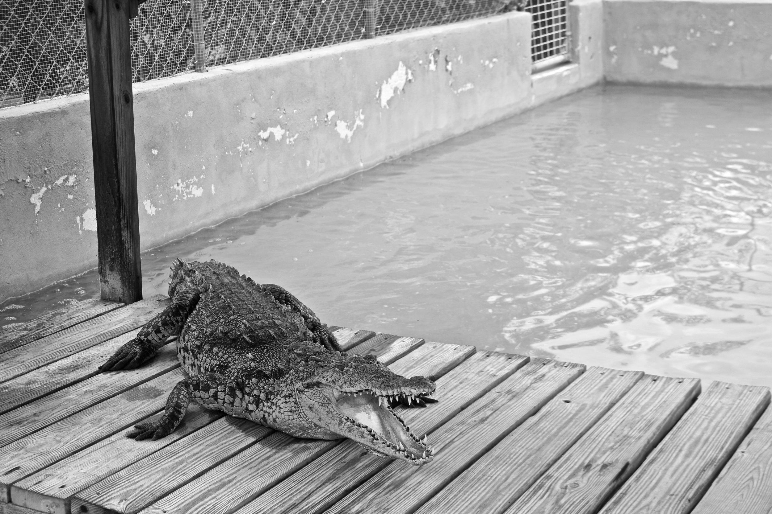 Wooten's Animal Sanctuary, Ochopee, FL.