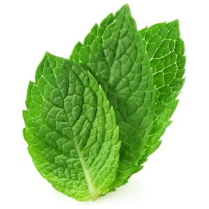 peppermint for morning sickness