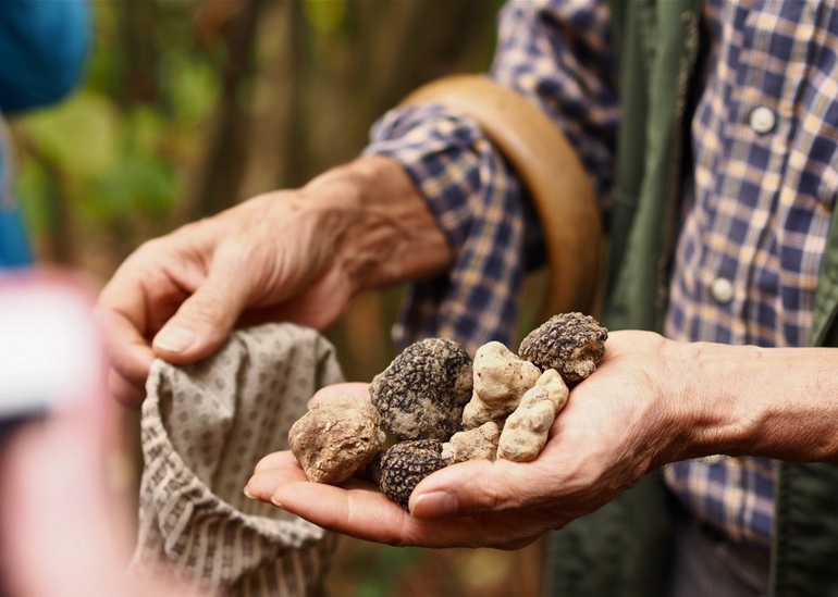 how-to-find-Italian-White-Alba-Truffle9.jpg