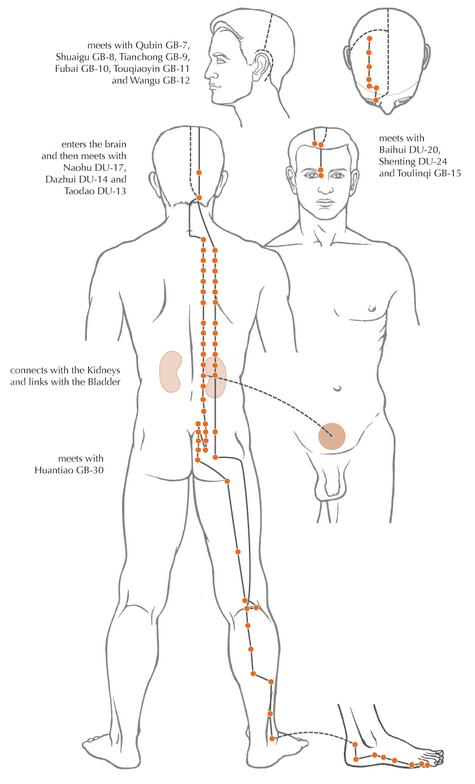An example of one of the channels of acupuncture - the Bladder channel.  When working on a neck problem, for example, the whole channel needs to be 'opened' rather than just concentrating on the area of pain.  This image is taken from  www.amanualofacupuncture.com