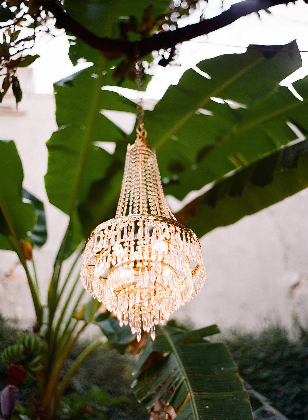 Chandeliers in trees for a secret garden wedding | This is what happens when a bride asks her guests to wear all white | Wedding En Blanc | Sapphire Events | Erika Parker Photography Montegut House | Luxury Wedding | Courtyard wedding | French Quarter Wedding | Luxe Wedding Details