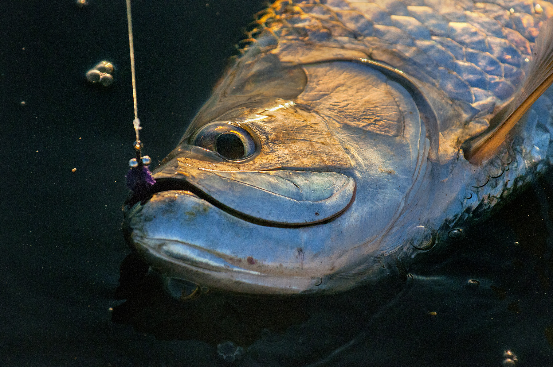 tarpon-on-fly-florida-keys-fly-fishing-with-saltwater-experience-by-jason-stemple