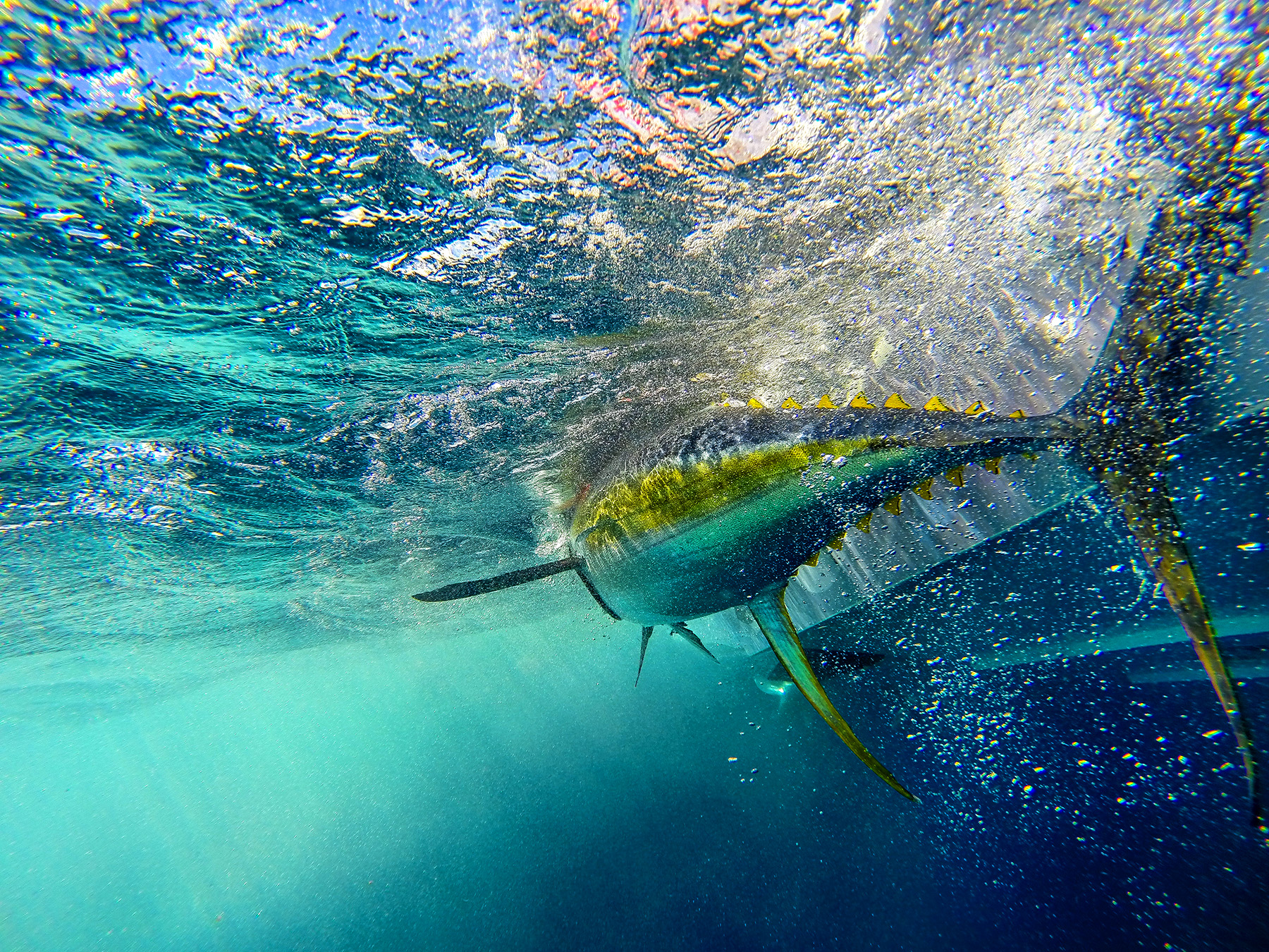 big-yellowfin-tuna-underwater-deep-sea-fishing-louisiana-into-the-blue