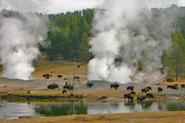 bison-in-thermal-area.jpg
