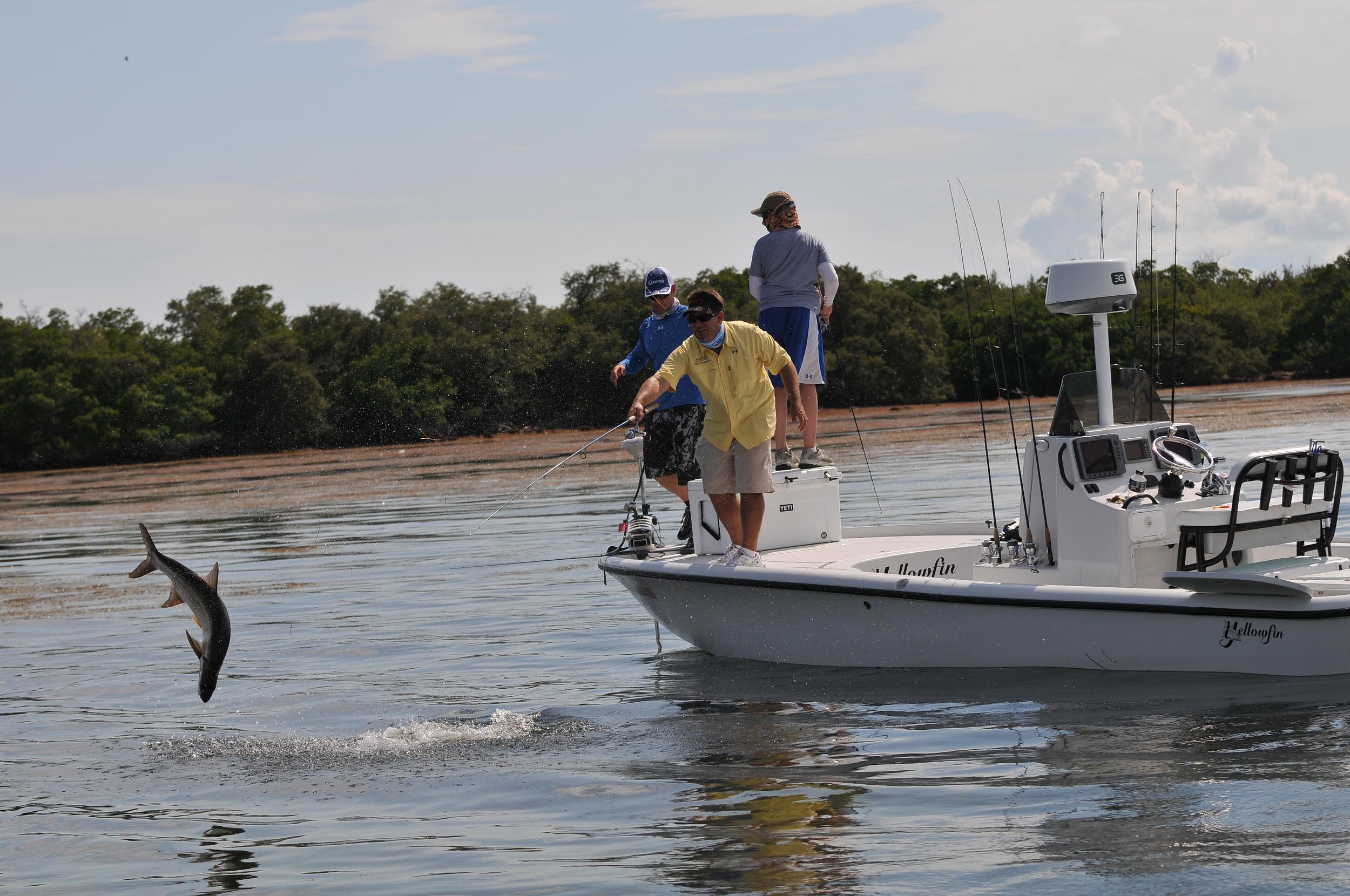 Rich tutor from saltwater experience jumps a tarpon near big pine key, florida