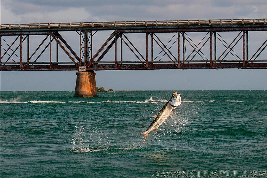 tom launches a big tarpon between the bridges. nikon d300s, 70mm, f/4.5, 1/3200 sec