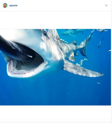 Shark-Eats-Camera-Instagram