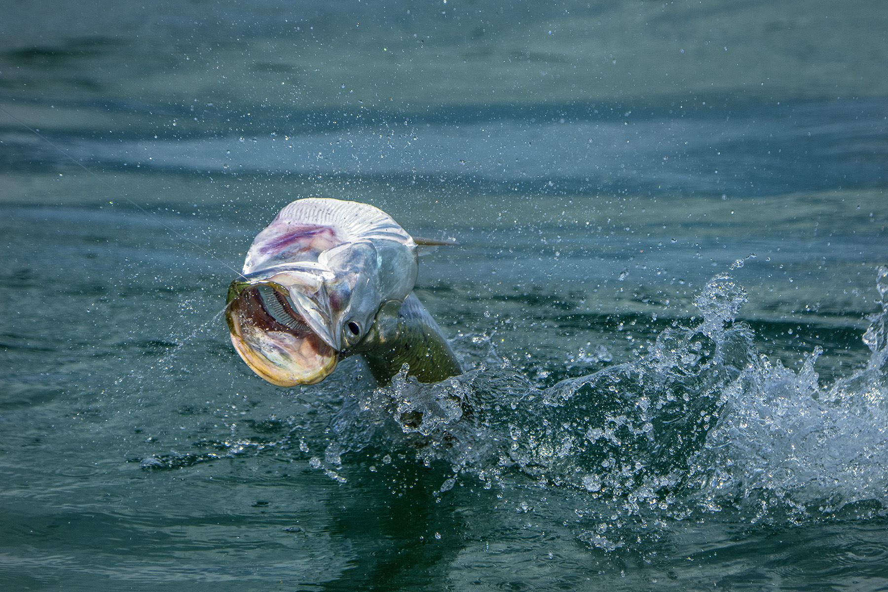 Tarpon out of the water while we fish for permit with Jeff Malone.