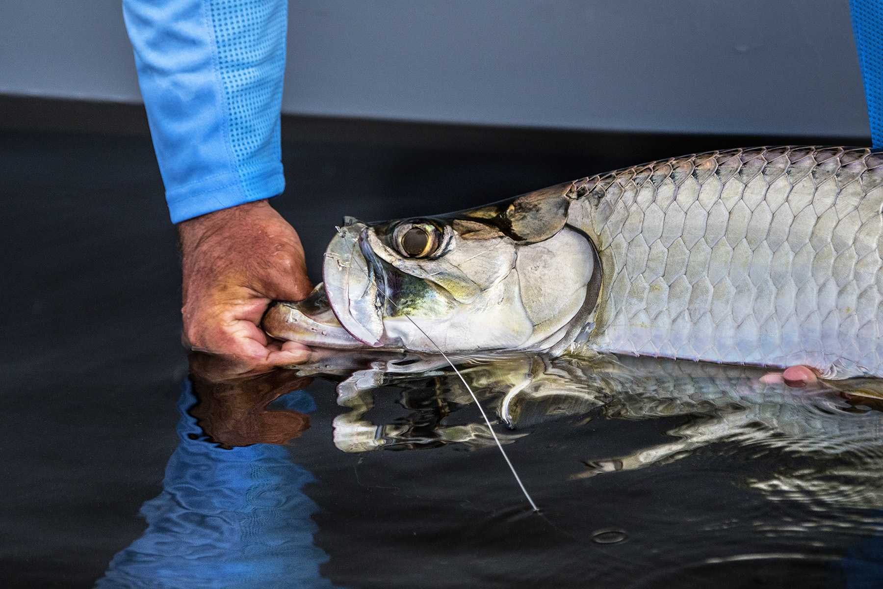Don't take the tarpon out of the water.