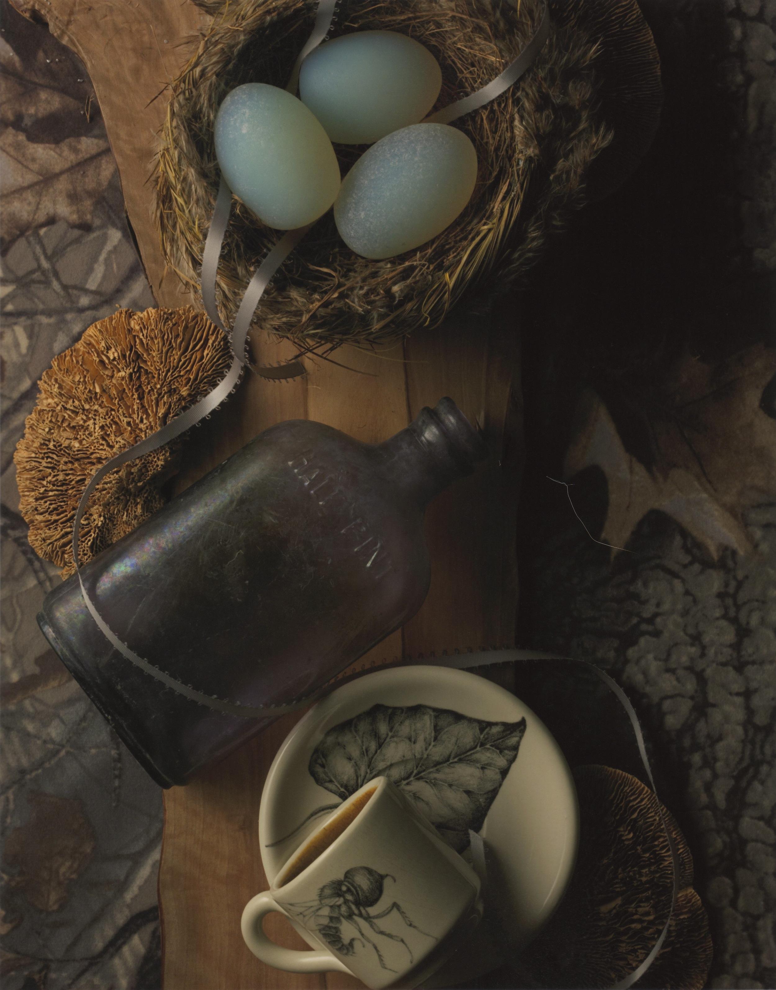 nest test.jpg