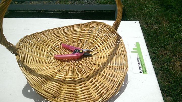 1. We provide you with picking baskets and snips for your flowers. Snips are for adult use only please.