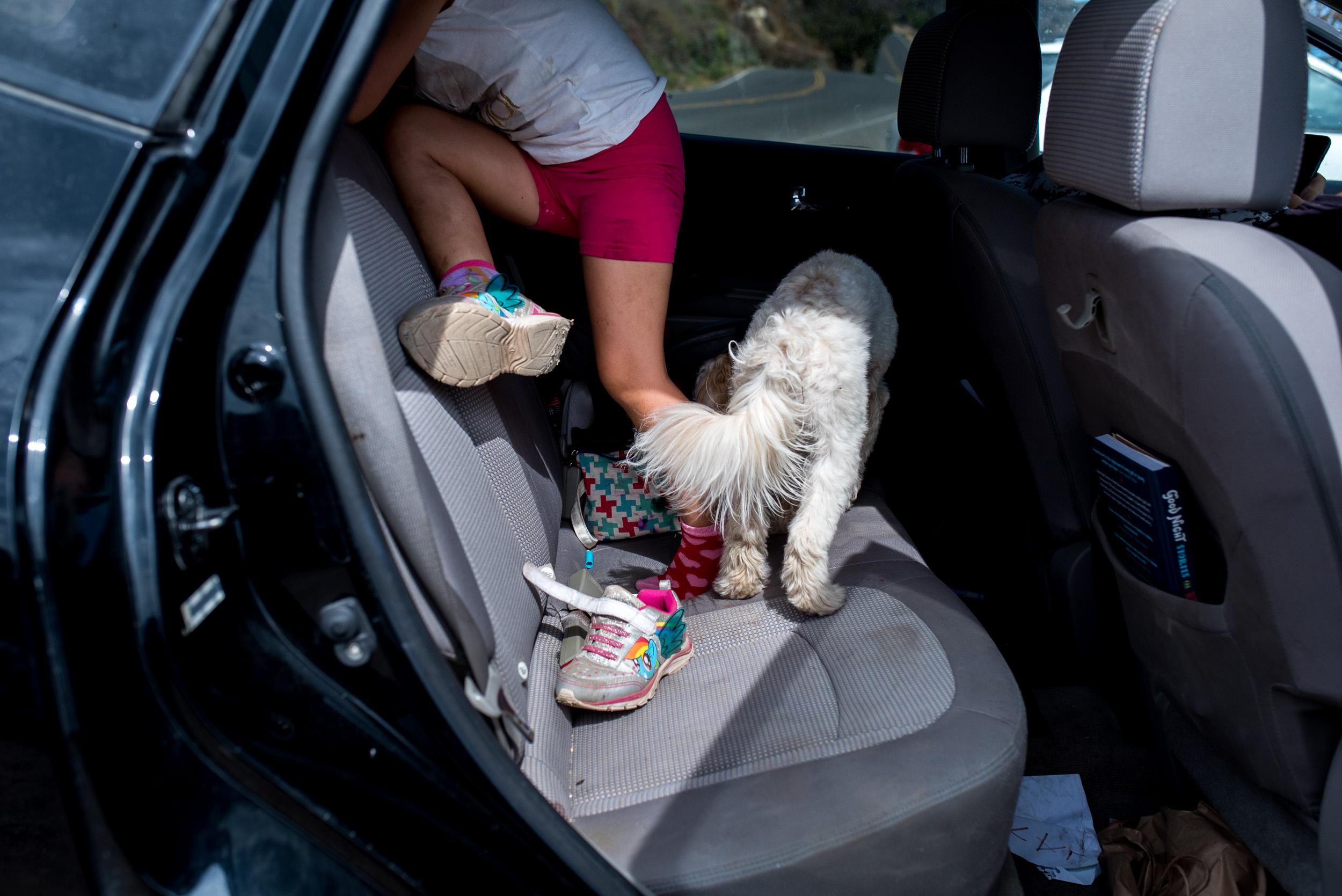 Deborah-Barak-Documentary-Family-Photography-Brooklyn_NYC_girl-and-dog-in-car.jpg