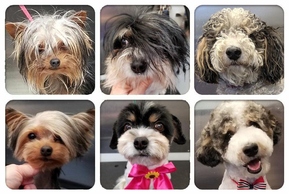 groomed-dogs-grid1000x671.jpg