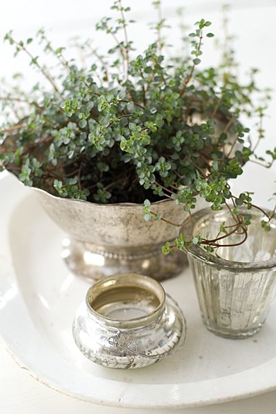 Thyme in antique silver footed bowl. I can almost smell the aroma!